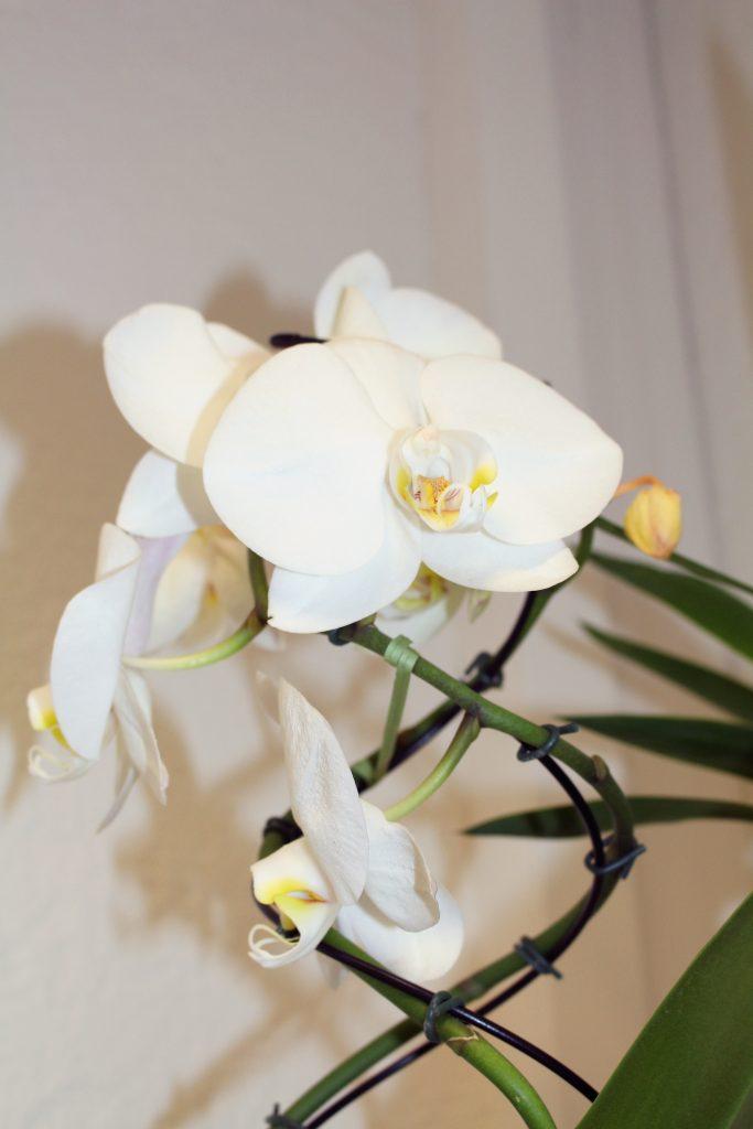 Plante à fleurs - Art floral